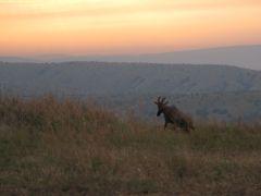 Akagera Rwanda Sunrise 2