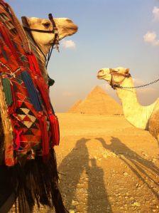 Egypt Camel Pyramid