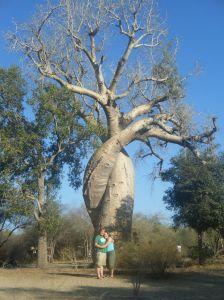Madagascar Loving Baobabs