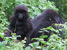Rwandan National Parks