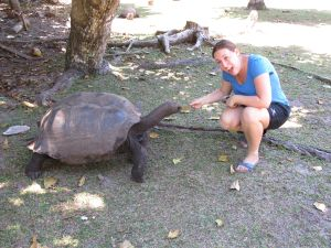 Seychelles Curieuse Tortise