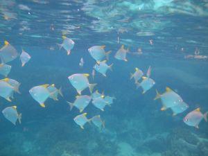 Seychelles Praslin Fish