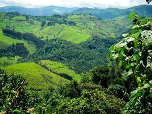 Gishwati Forest Reserve, Rwanda