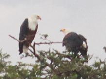 Birding in Kirundo