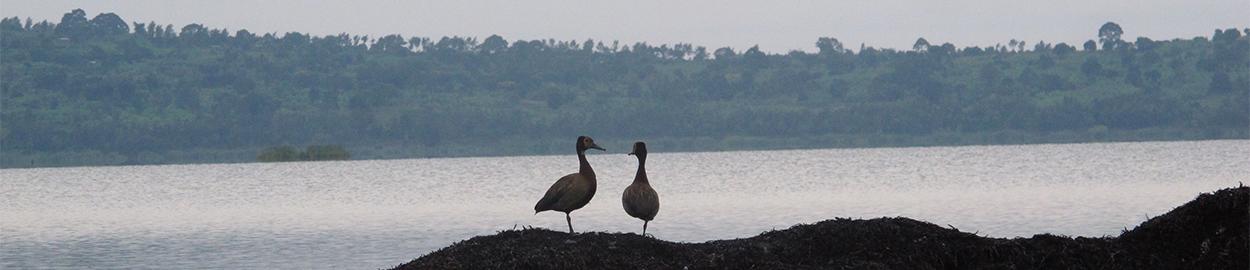 Kirundo Birds
