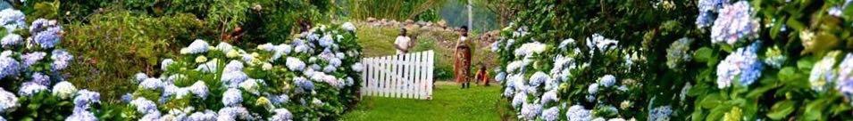 Roz Carr's Gardens Rwanda