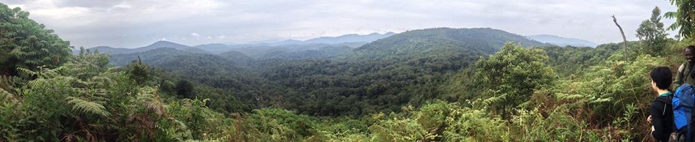 Nyungwe Panorama