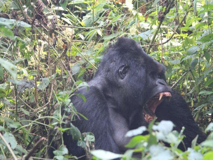 Virunga 01