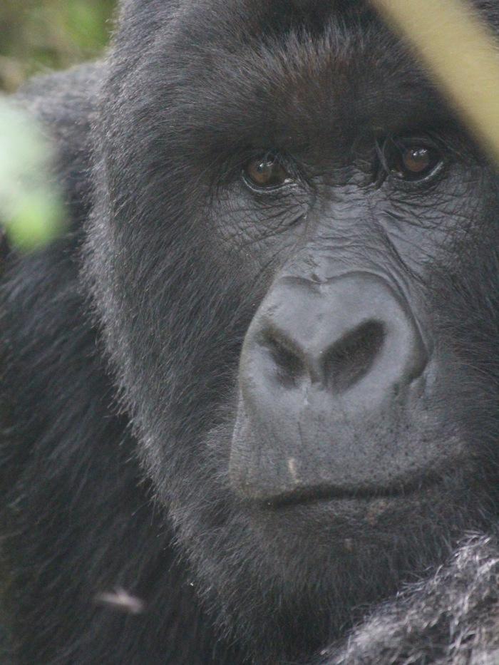 Virunga 03