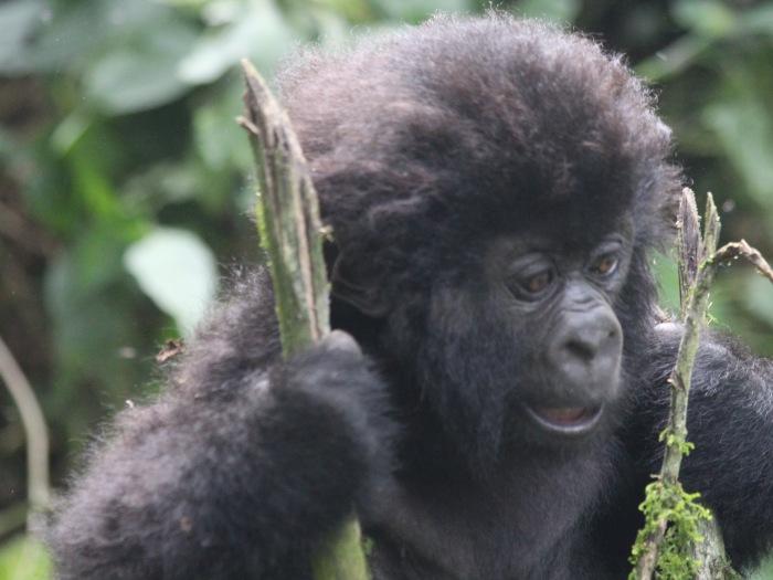 Virunga 07